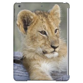Lejona ungar loggar på, pantheraen leo, masaien Ma