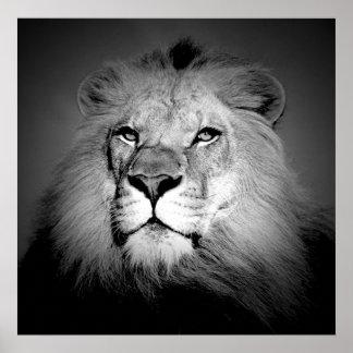 Lejont affischtryck för svart & för vit/BW - Poster