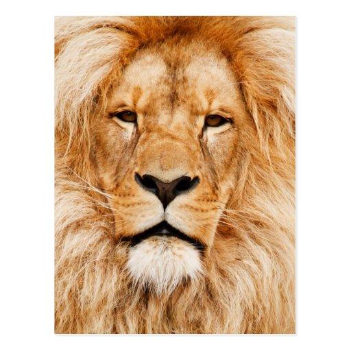 Lejont ansikte fotograferar vykort
