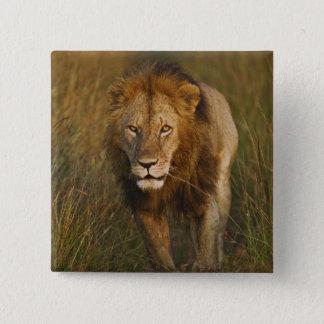 Lejont spårar gå för vuxen manlig till och med däc standard kanpp fyrkantig 5.1 cm