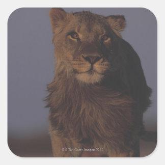 Lejont spring fyrkantigt klistermärke