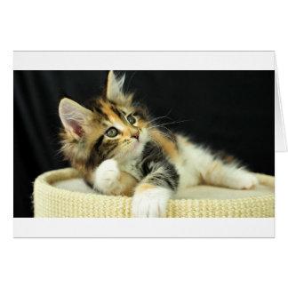 Lekar för kattunge för CalicoMaine Coon Hälsningskort
