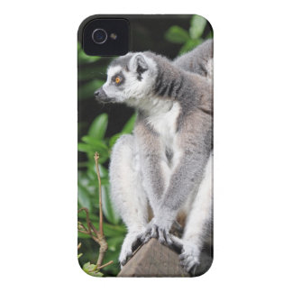 Lemur ring-tailed gulligt fotoblackberry iPhone 4 Case-Mate case