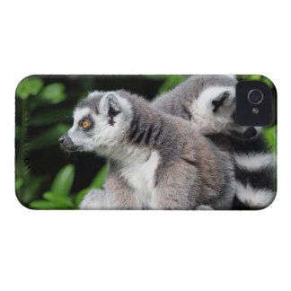 Lemur ring-tailed gulligt fotoblackberry iPhone 4 Case-Mate cases