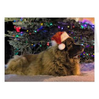 Leonberger Sparkly julkort Hälsningskort