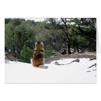 Leonberger sympatikort hälsningskort