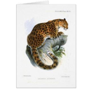Leopard Hälsningskort