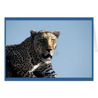 Leopard som synar middagen hälsningskort