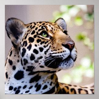 Leoparden fotograferar print