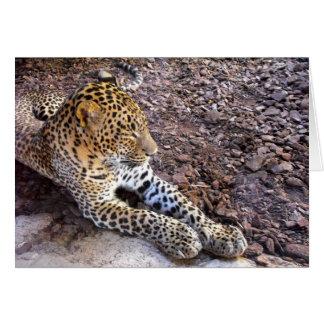 Leoparden på vilar hälsningskort