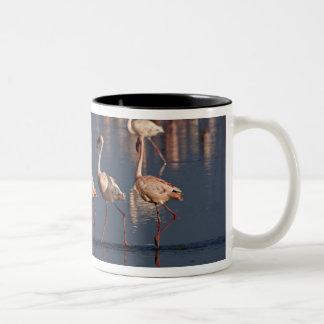 Lesser Flamingos som visar, sjö Nakuru Två-Tonad Mugg