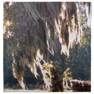 Levande Oakträd med att drapera spansk Moss Tygservett
