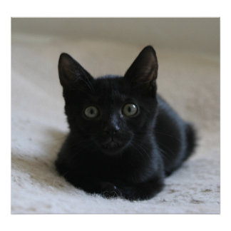 Lil svart kattungeaffisch poster