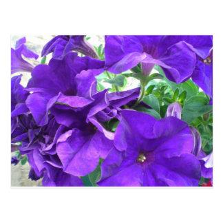 Lila blommor vykort