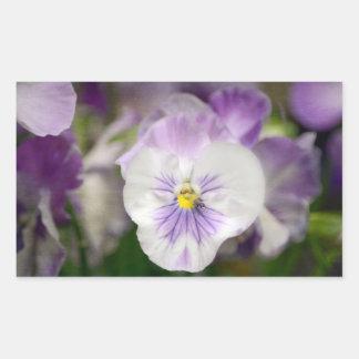 Lila- och vitViolas av Shirley Taylor Rektangulärt Klistermärke