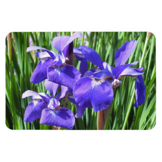 Lilan Irises fotomagneten Magnet