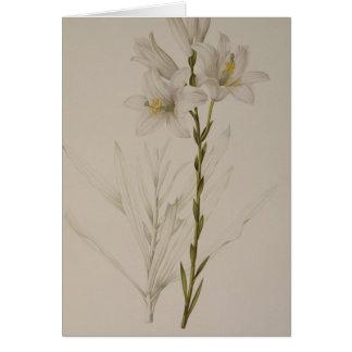 """Lilium som är candidum, från """"Les Liliacees"""", 1807 Hälsningskort"""
