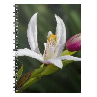 lilja anteckningsbok med spiral