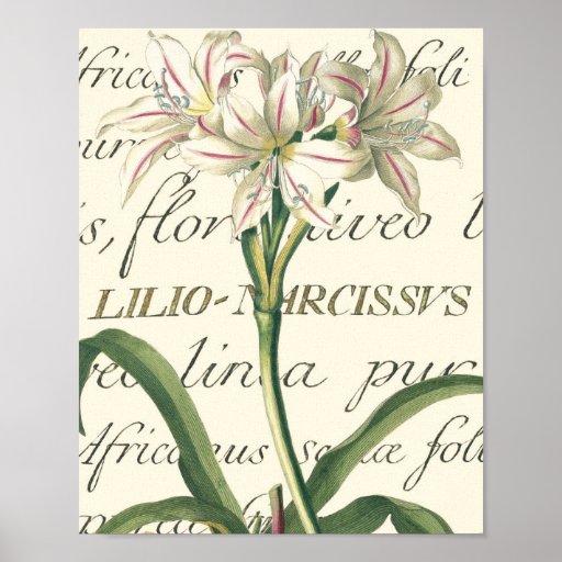 Liljan med calligraphic specificerar affisch