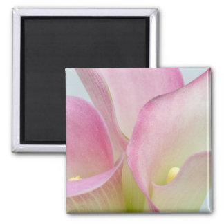 Liljar för rosa Calla Magnet