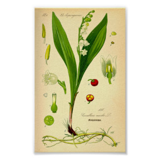 Liljekonvalj (Convallariamajalis) Poster