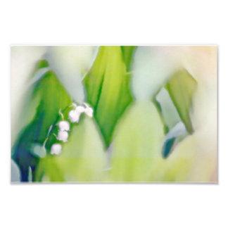 Liljekonvaljen skissar fototryck