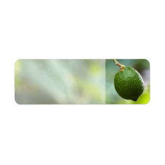 Limefrukt Returadress Etikett