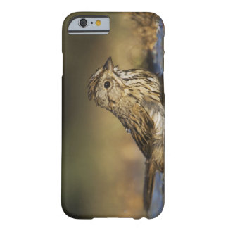 Lincolns Sparrow, Melospizalincolnii, vuxen Barely There iPhone 6 Skal