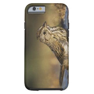 Lincolns Sparrow, Melospizalincolnii, vuxen Tough iPhone 6 Fodral