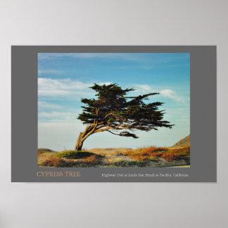 Linda fördärvar Cypress Poster