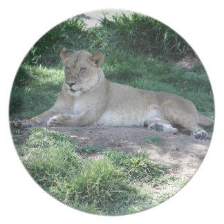 Lioness Tallrik