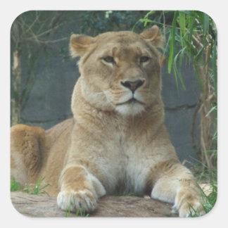 Lionessklistermärke Fyrkantigt Klistermärke
