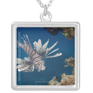Lionfish (Pteroisvolitans) som simmar över Silverpläterat Halsband