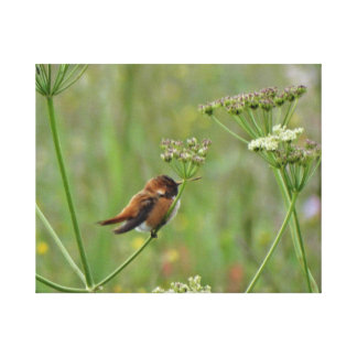 lite Hummingbird Canvastryck