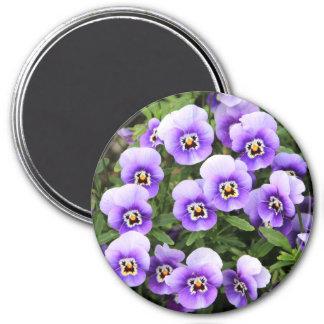 Lite purpurfärgade Pansies Magnet