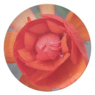Liten Begonia Tallrik