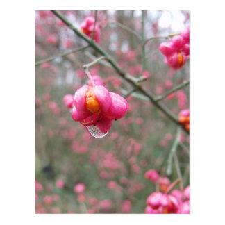 Liten droppe för Spindleträd och vatten Vykort