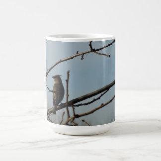 Liten fågel på trädlimben i vinter kaffemugg