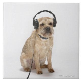 Liten hund som ha på sig hörlurar kakelplatta