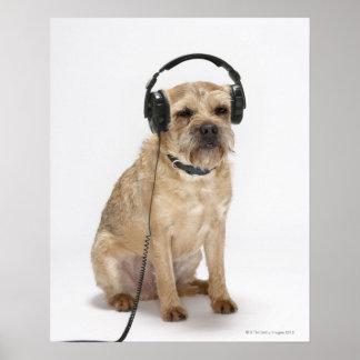 Liten hund som ha på sig hörlurar poster