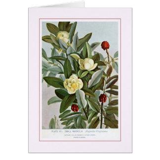 Liten Magnolia Hälsningskort