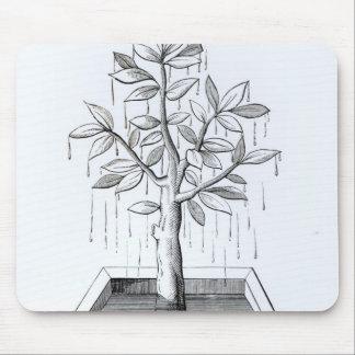 Livets träd eller det gråta träd musmatta