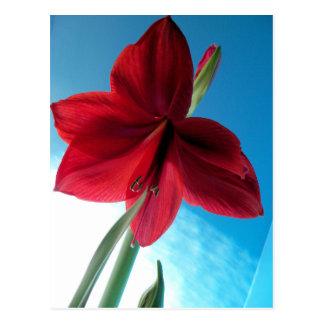 livlig röd blomma för Amaryllis 108a Vykort