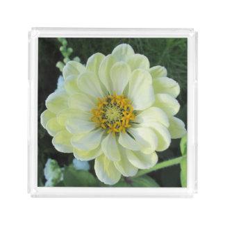 Ljus Dahlia - gul blomma Bricka