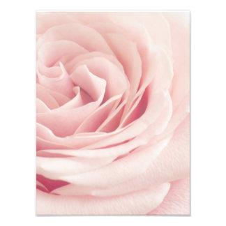 Ljusa - rosa rosblomma - ro blommar blommigt fototryck