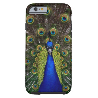 Ljust flickaktigt nätt djur för påfågelfågelnatur tough iPhone 6 case