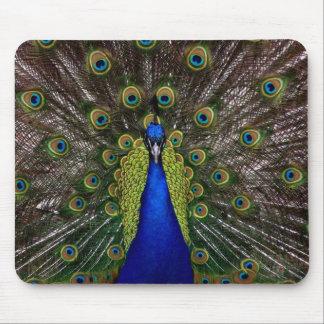 Ljust regal foto för djur för påfågelfågelfjäder musmatta