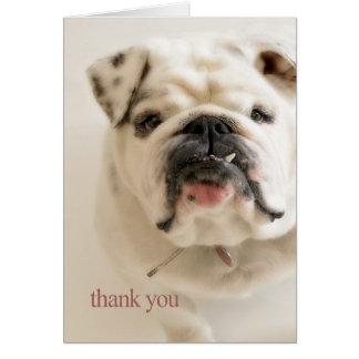 Lojalt vitbulldoggtack hälsningskort