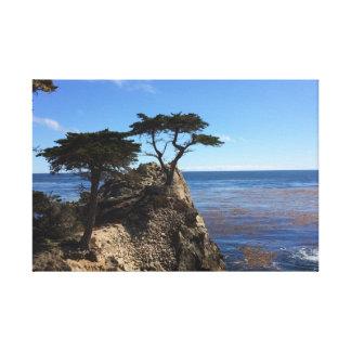 Lone Cypress Canvastryck