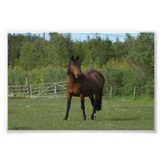 Lone häst fototryck